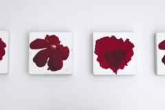 Ranunculae acris I och Papaver, 15 x 15 x 3 cm